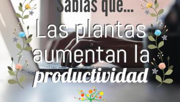 jardinería, jardines, jardin, plantas, beneficios de las plantas, productividad, medio ambiente, naturaleza
