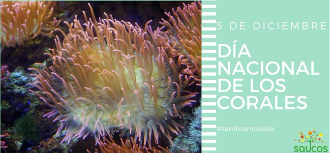 dia corales
