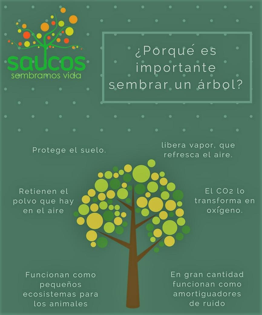 dia arbol (2)